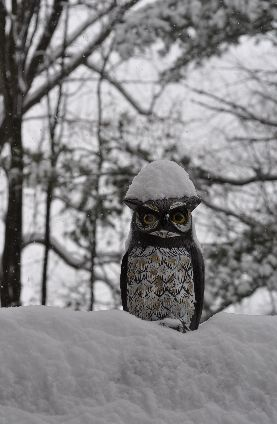 Plastic great horned owl covered in snow