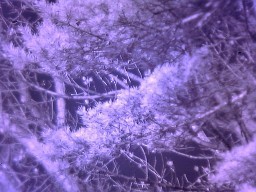 Infrared photograph from modified webcam